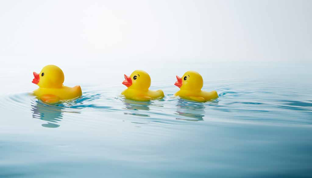 Entenrennen auf der Saale