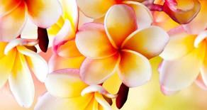 Allen Müttern die schönsten Blumen