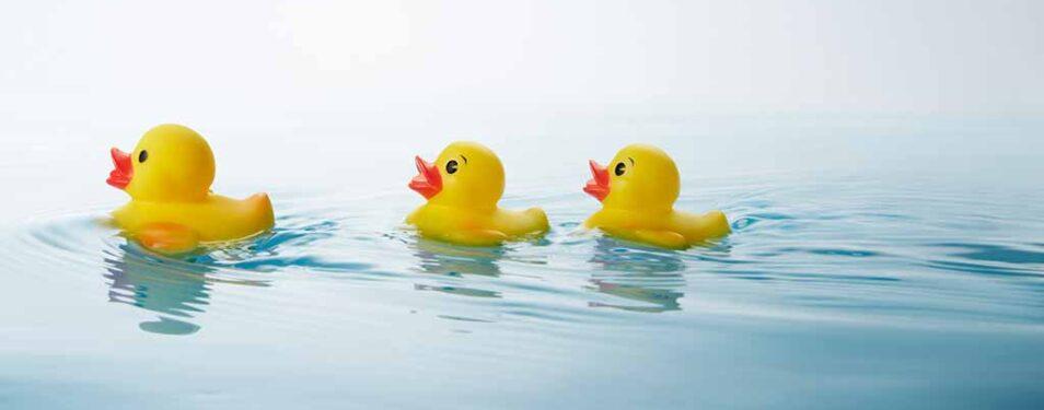 Entenrennen auf der Saale bei Dornd...