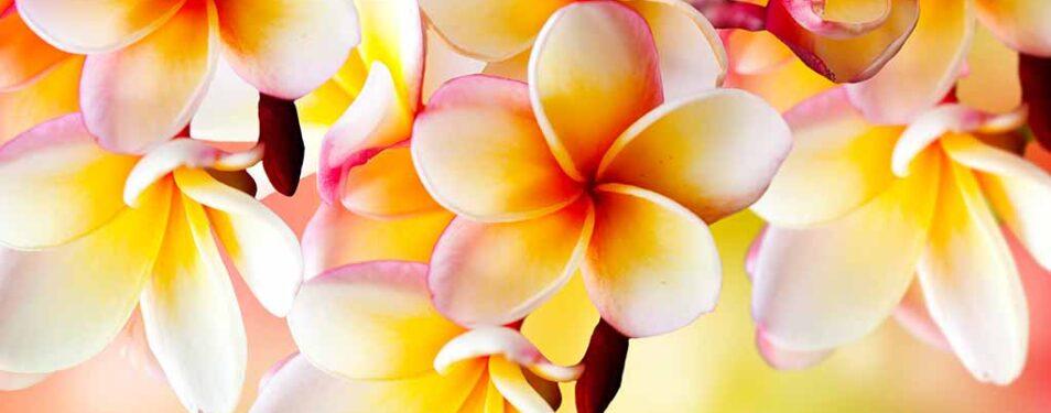 Allen Müttern die schönsten Blumen...